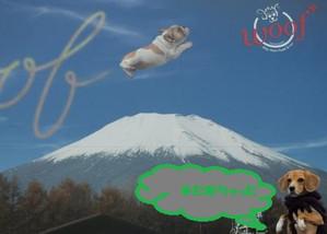 2012_1203_161916dscf2210misa